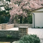 Large cherry blossom tree next to stone paver patio with stone walls